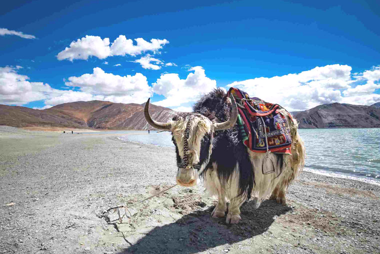 leh ladakh tour packages, leh ladakh tour packages cost, leh ladakh tour packages with airfare, leh ladakh tour packages jammu and kashmir, leh and ladakh tour packages, leh ladakh adventure tour packages, leh and ladakh tour packages from guwahati, leh ladakh tour packages by road, delhi to leh ladakh tour packages by road, leh ladakh tour best time, best leh ladakh tour packages, leh ladakh tour experience, leh ladakh tour guide, leh ladakh group tour packages, leh ladakh tour packages honeymoon, leh ladakh tour package manali himachal pradesh, leh ladakh honeymoon tour packages cost, leh ladakh tour hotels, leh ladakh tourism hotels, leh ladakh tour packages itinerary, leh ladakh tour itinerary, leh ladakh tour in bike, leh ladakh kargil tour packages, leh ladakh tour operators, leh ladakh tour operators in guwahati, leh ladakh tour operators guwahati, leh ladakh tour offers, leh ladakh tour packages price, leh ladakh trip package from pune, leh ladakh tour plan, places to visit in leh ladakh, places to visit in leh ladakh trip, places to visit in leh and ladakh, places to go in leh ladakh, best places to visit in leh ladakh, famous places to visit in leh ladakh, list of places to visit in leh ladakh, places must visit in leh ladakh, where to visit in leh ladakh, which places to visit in leh ladakh